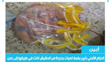صورة الحزام الأمني بأبين يضبط كميات جديدة من الحشيش كانت في طريقها إلى عدن