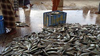 صورة التصدير العشوائي وغياب الرقابة يحرمان مائدة عدن من الأسماك