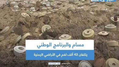 صورة مسام والبرنامج الوطني يتلفان 43 ألف لغم في الأراضي اليمنية