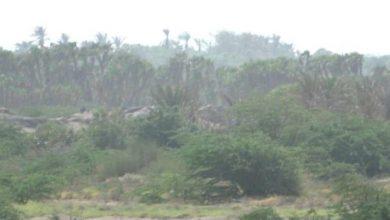 صورة الحديدة.. رصد تعزيزات حوثية في الجبلية