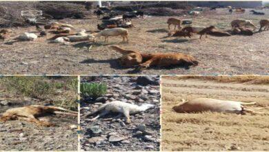 صورة بعد مناشدة الأهالي.. عينات فحص تصل #عدن للكشف عن وباء غير معروف