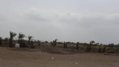 صورة مليشيا الحوثي تستهدف منازل ومزارع المواطنين في الجبلية جنوب الحديدة