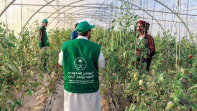 صورة «البرنامج السعودي» يدعم قطاع الزراعة في المهرة بعدد من المشاريع