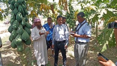 صورة رئيس تنفيذية انتقالي أبين يطّلع على أوضاع مركز الأبحاث الزراعية ومحلج القطن بالمحافظة
