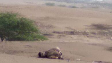 صورة مصرع القيادي الحوثي أبو الكرار النهاري باشتباكات جنوب الحديدة اليمنية