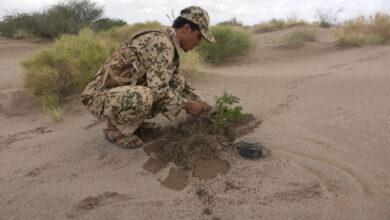 صورة الفرق الهندسية للقوات المشتركة تنزع ألغام فردية حوثية